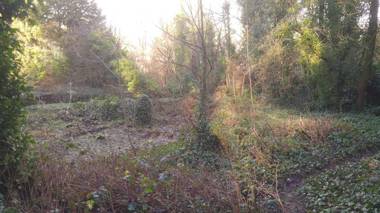 grot 2.jpg