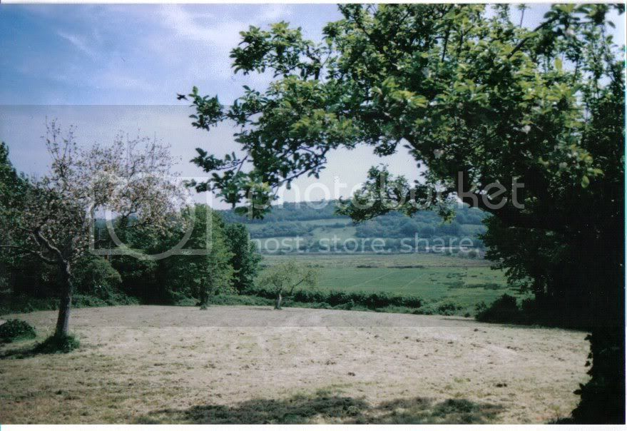 orchard05.jpg