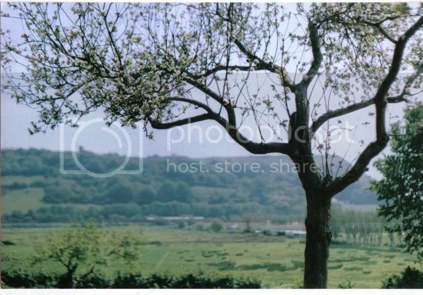 orchard06.jpg