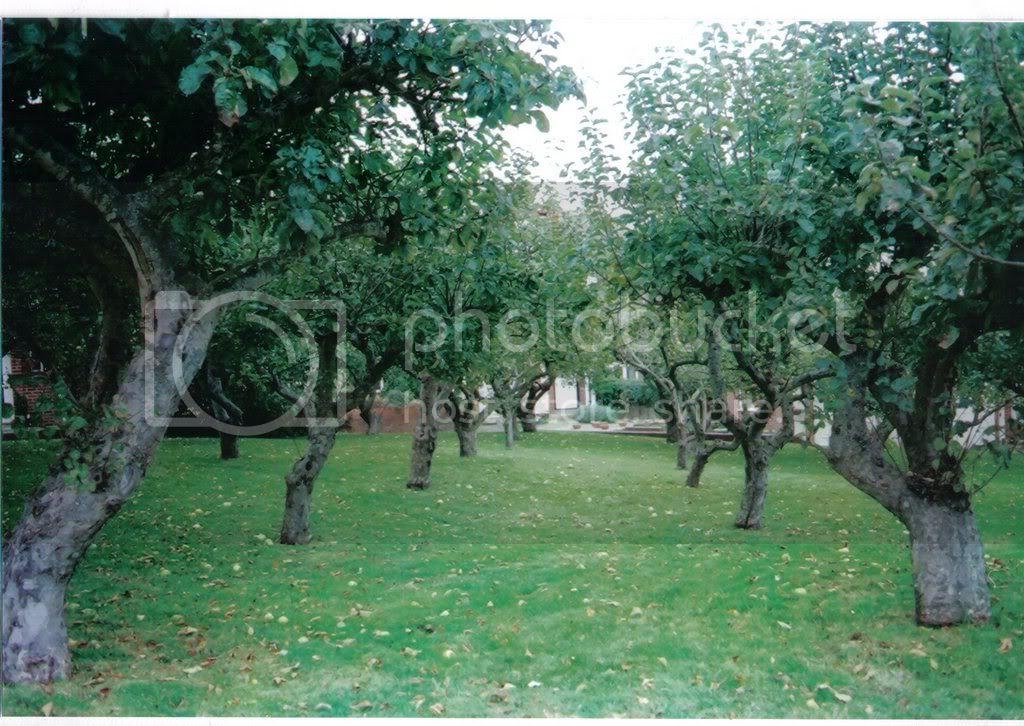 orchard10.jpg