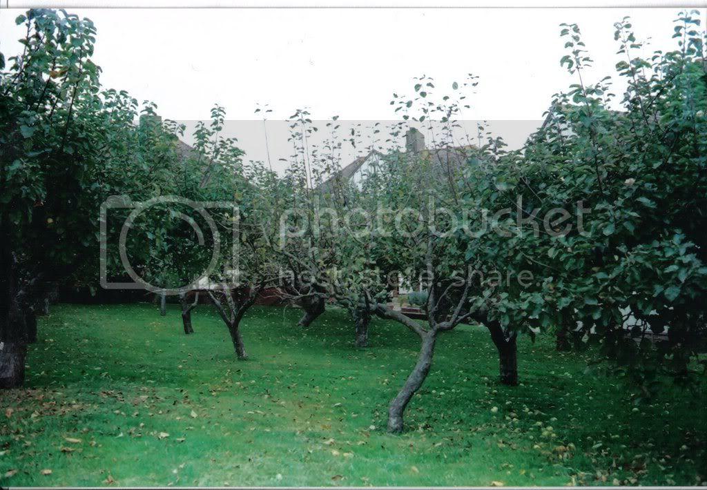 orchard15.jpg
