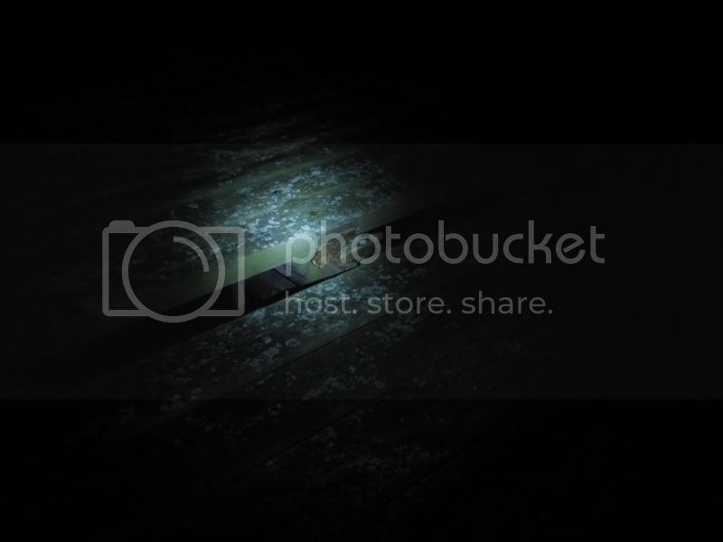 Photo448.jpg