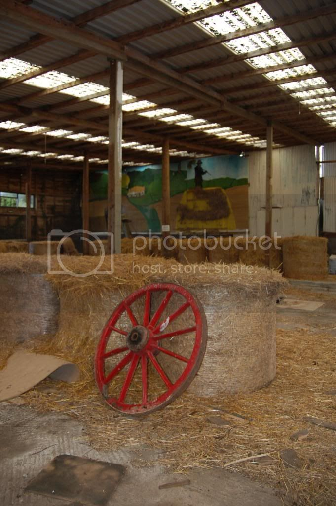 shirehorsecentre020.jpg